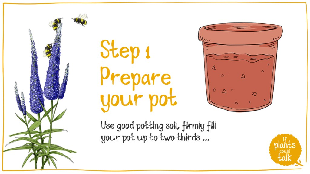 Step 1 prepare your pot with a soil mix, filling to about two thirds full