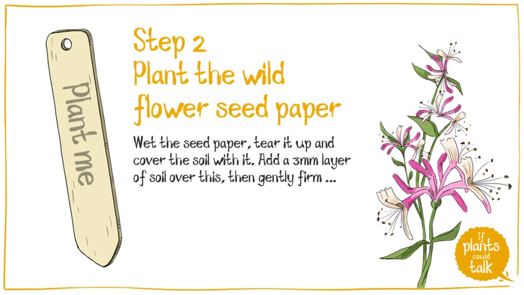 Step two of planting wildflower seed paper, wet the paper and place on soil, tear it up to make a better shape if that works for you